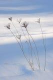 Dry grass blade Stock Photo