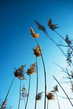 Dry grass. blue sky. dream Royalty Free Stock Photos