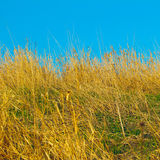 Dry grass and blue sky Royalty Free Stock Photos