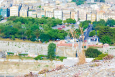 Dry grass and blurred background with aerial view of Corfu city Stock Photography
