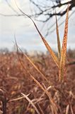 Dry grass with a brush. Against the sky and dry wood royalty free stock photos