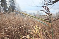 Dry grass with a brush. Against the sky and dry wood royalty free stock photography