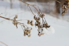 Dry grass - a burdock royalty free stock images