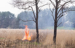 Dry grass is burning after the arson. Stock Photos