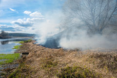 Dry grass burning Royalty Free Stock Photo