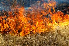 Dry grass burning in the forest Stock Image