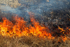 Dry grass burning in the forest, strong wind Royalty Free Stock Photography