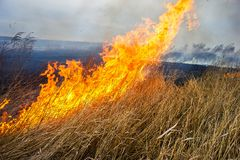 Free Dry Grass Burns In The Steppe. Royalty Free Stock Images - 119272119