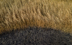 Dry grass and burnt earth. Daylight Royalty Free Stock Image