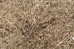 Dry grass close-up, hay texture. Abstract. Stock Photography