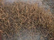 Dry grass Royalty Free Stock Images