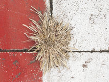 Dry grass. On colorful wall Royalty Free Stock Photos