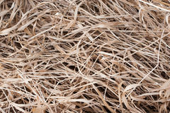 Dry grass Stock Images
