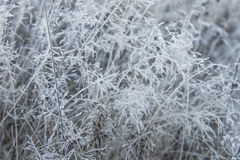 Dry grass covered with frost Stock Photos