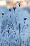 Dry grass covered with hoarfrost Royalty Free Stock Photo