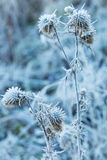 Dry grass covered with hoarfrost Royalty Free Stock Images