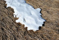Dry grass covered with white melting snow, natural background. Top view stock images