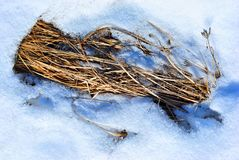 Dry grass covered with white melting snow, natural background. Top view stock photo