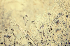 Free Dry Grass Covered With Fragile Hoarfrost In Cold Winter Day Stock Photo - 84905350