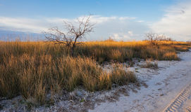 Dry grass in the desert illuminated by setting sun. Dry grass in the desert illuminated by the setting sun Royalty Free Stock Images
