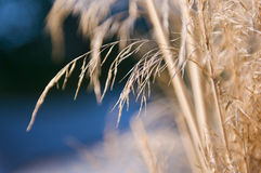 Dry grass detail Stock Photography