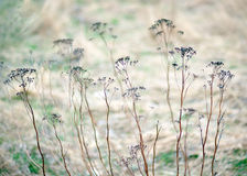 Dry grass in early spring Royalty Free Stock Images