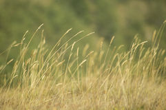 Dry grass in field Stock Photos