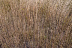 Dry grass in a field Royalty Free Stock Images