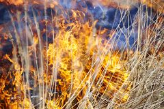 Fire in grass. Dry grass in  field burns dangerously Royalty Free Stock Photos