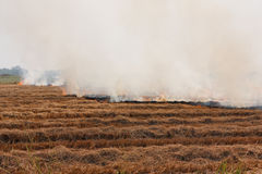 The dry grass in the field burns inflated Royalty Free Stock Images