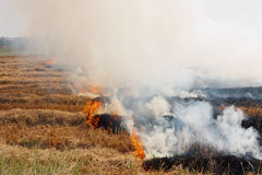 The dry grass in the field burns inflated Royalty Free Stock Image