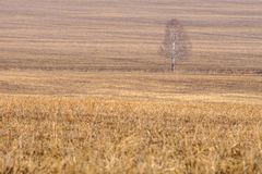 Dry grass on the field early spring, among the grass is a tree Royalty Free Stock Photography