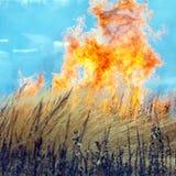 Dry Grass Field Fire Disaster Closeup Stock Photos