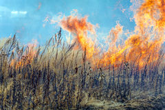 Dry Grass Field Fire Disaster Closeup Royalty Free Stock Photos