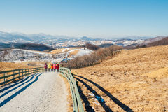 Dry grass field and mountain and snow and winter landscape in Daegwallyeong sheep ranch, Korea. Dry grass field and mountain and snow and winter landscape in Stock Image
