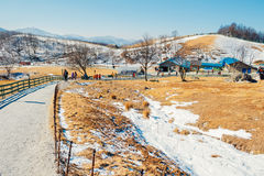 Dry grass field and mountain and snow and winter landscape in Daegwallyeong sheep ranch, Korea Royalty Free Stock Images