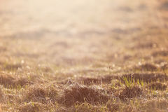 Dry grass field pasture in sunset sunlight Royalty Free Stock Image