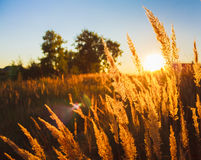 Dry grass field scene Royalty Free Stock Photos