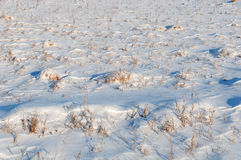 Dry grass field snow Royalty Free Stock Photo
