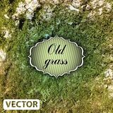 Dry grass field texture. Background. Vector illustration Royalty Free Stock Photography