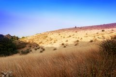 Dry grass field under bluesky stock images