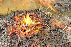 Dry grass on fire. Royalty Free Stock Photo