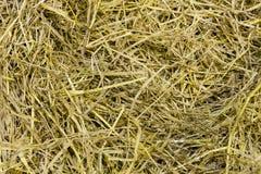 Dry grass on floor Stock Photos