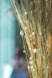 Dry grass flower Stock Photography