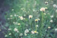 Dry grass flower field, weed plant closeup. Copy space brown warm tone light morning white floral petal background crop meadow garden outdoor backyard country stock photos