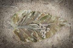 Dry Grass flower Stock Photos