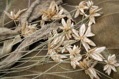 Dry Grass flower Royalty Free Stock Photo