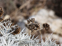 Dry grass with flowers, blurred background Stock Photography