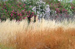 Dry grass and flowers. Royalty Free Stock Photography