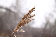 Dry grass in the forest. started winter Stock Photos